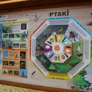 Kolorowa tablica edukacyjna zawierająca informacje o ptakach